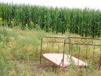 Ein Bett im Kamillenfeld