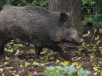This chap got caught up in our garden trying to make friends with our sow Polly!!