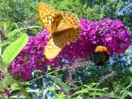 Butterfly and a bumblebee feeding on the Lilac bushes in front of the apartment.