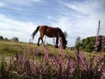 New forest ponies horses pigs and donkeys run wild