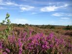 150 square miles of New Forest National Park from your door step