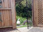 Moorhen Cottage visitors looking through canal gate