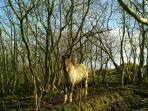 The pony chomps its way around the paddock and wood just beside the cottage.