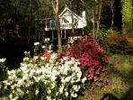 front yard in the spring