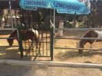 Horse riding stables 5 mins from apartment 20 euro per hour