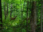 Deer in the forest.