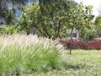 Plants are abundant around the resort.
