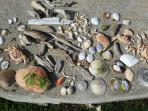 Seaside treasures...