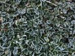 Frost on the lawn in winter.