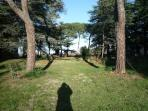 Vista del parco storico e dei suoi pini.