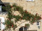 Roses dans  la cour et le calme