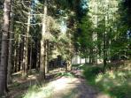 Promenade dans les bois voisine