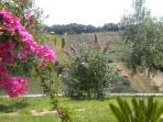 Un angolo di giardino