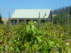 View from the vineyard in summer