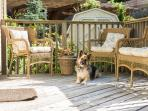 Dreamweaver Cottage welcomes your furry family member!