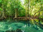 Emerald pools , one of Krabi's highlights