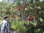 Our Picnic Tree is great for kids
