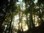 Bosque de castaños al lado de las casas