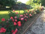 Le jardin est orné de plus de 100 rosiers