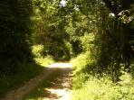 Chemin de randonnée a partir du gîte.