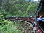Puffing Billy Steam train passes alongside your Cottage.