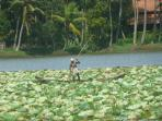 Picturess Valani lake ,10mins ride away, lotus flowers in abundance .