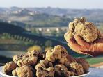 White Truffles from Langhe. Taste it at International White Truffle in Alba (Fiera del Tartufo)
