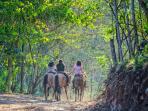 Horseback Guided Tours