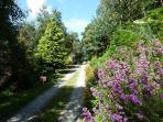 Woodland haven