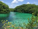 Cenotes like this are everywhere to enjoy