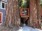 The Sandy Star, Deck Trees