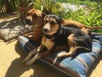 Pet friendly: enjoying the morning sun on the veranda