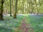 Spring down in the woods is something really special, absorbing the sights, sounds & smells. Great !