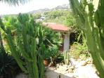 Cactus Garden and Outside Dining