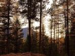 Fall Mountain Views | The Ridge At Glacier, MT