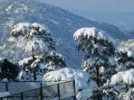 Snow in Shimla
