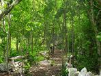 Selvamar lush, tropical walkways