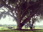 enjoy reading or a swing under the fig tree