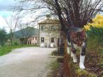 FARMHOUSE in the PARK EUGANEAN where PETS are WELCOME