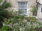 Front raised garden
