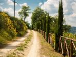 La strada che conduce alla villa