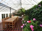 Greenhouse in bloom