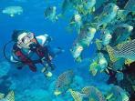 Experience scuba diving and near Sindhudurg fort , built by Maratha King Shivaji Maharaj.