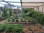 Organic garden in spring