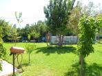Steliana's garden