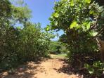 Follow this trail 10 minutes down to the Secluded Beach.
