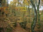 Y ahora estamos entrando en la estación del otoño, el bosque de Bertiz es especial en esa época.