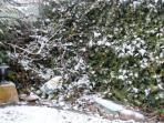 Jardín nevado