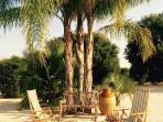 Palm tree and hazel bench
