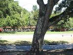enjoy the beauty of City Park and excited little ones on the choo-choo train from the front porch